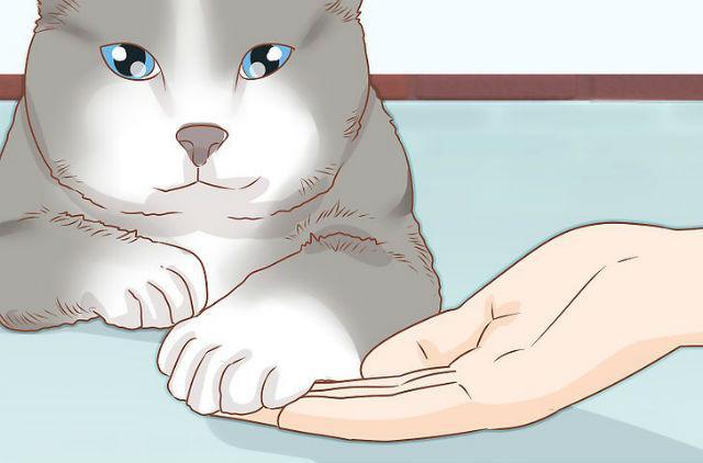 Подготовка кошки к стрижке когтей