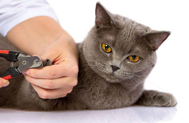 Процедура стрижки когтей у кошки