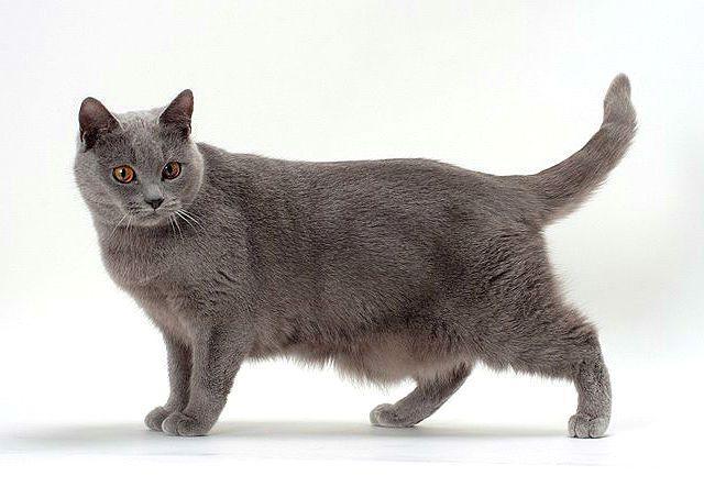 Картезианская кошка - главное фото