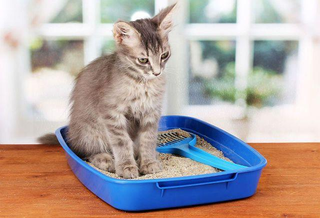 Запор у кошки
