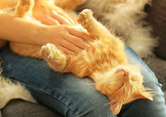 Массаж живота котенку