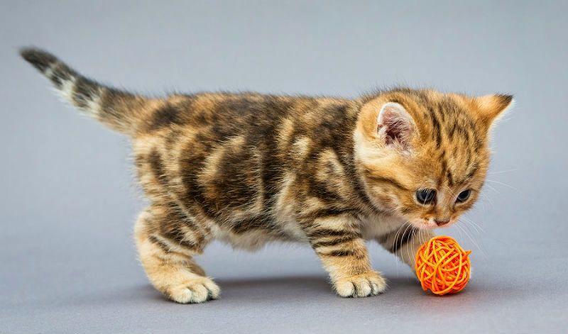 Рост кота от первых дней