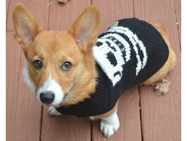 Одежда для вельш-корги - свитер
