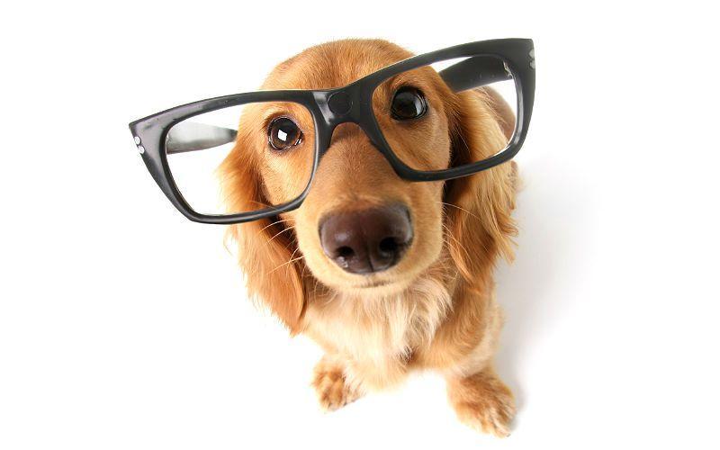 Умные породы собак - главное фото