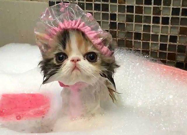 Котенок купается