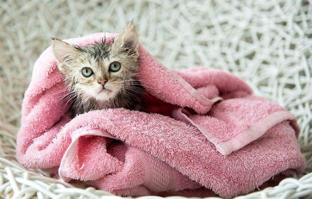 Как правильно купать котенка