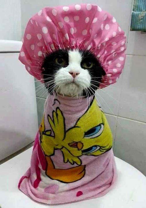 Искупанный котенок
