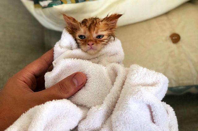 Как высушить шерсть котенка