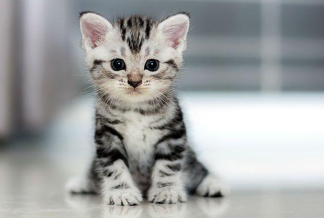 Клички для котят