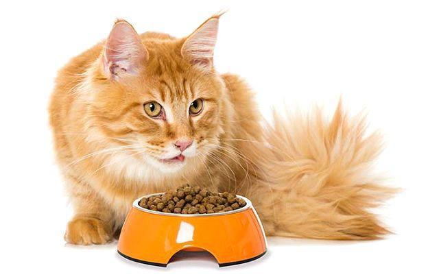 Фирменный корм для кошки при мочекаменной болезни