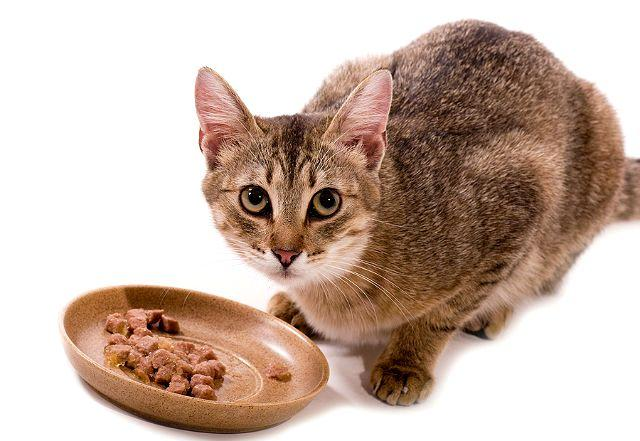 Влажный корм для кошки при мочекаменной болезни