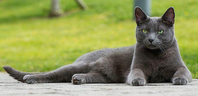 Кошка из рекламы корма Шеба