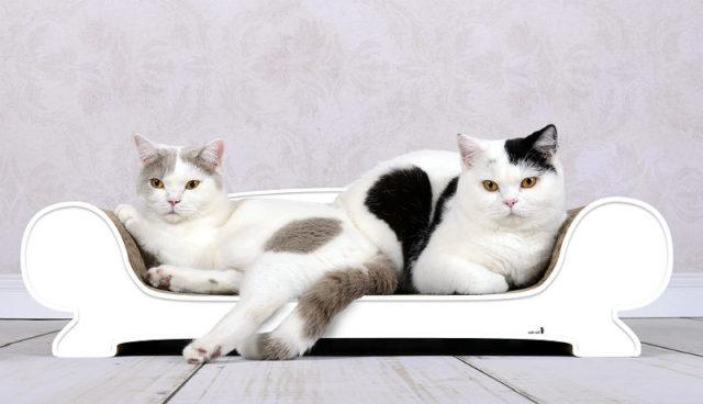 Лучшие породы кошек для квартиры
