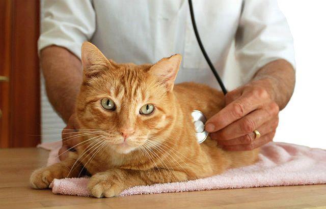 Выведение гельминтов у кошек