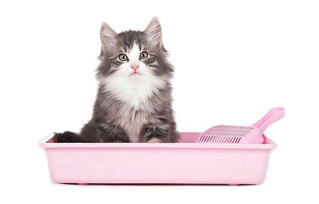 Наполнитель для кошачьего туалета - как выбрать
