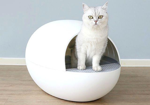 Выбор наполнителя для кошачьего туалета