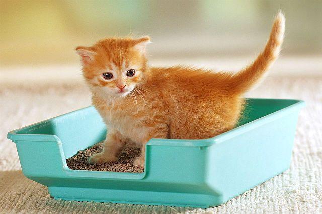 Минеральный наполнитель для кошачьего туалета