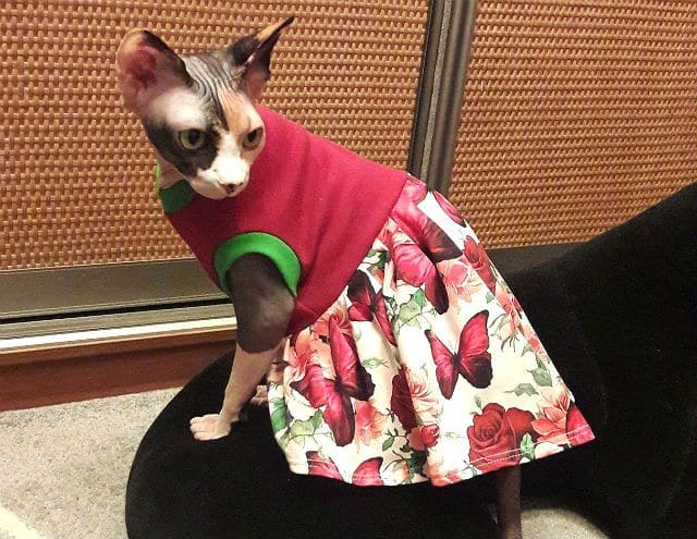 Одежда для кошек - платье