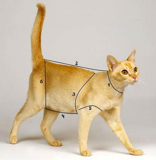 Одежда для кошек - снятие мерок