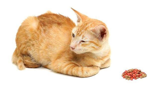 Симптомы почечной недостаточности у кошки