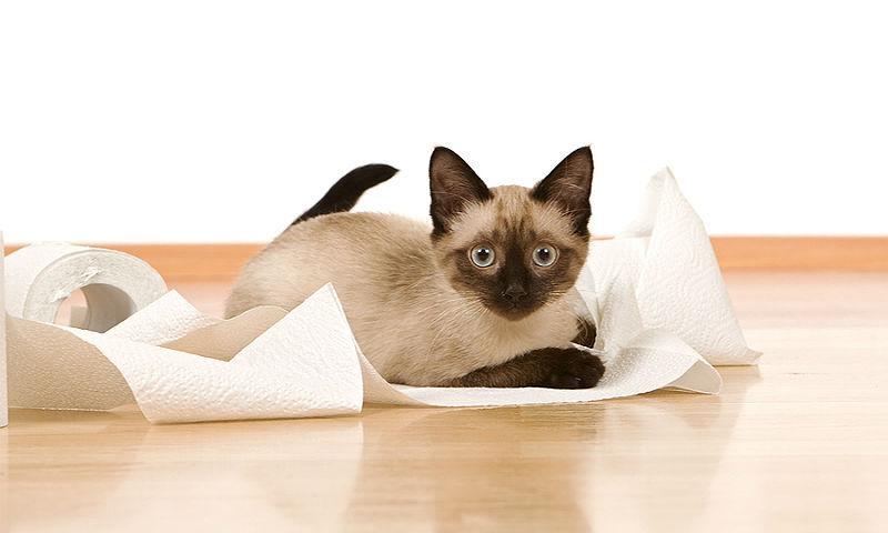 Понос у котов - причины
