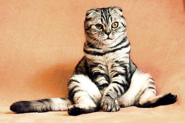 Понос у котов
