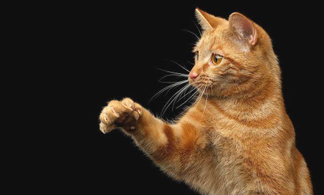 Рыжий кот из рекламы Friskies