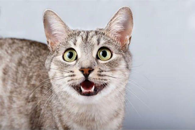 У кота неприятно пахнет изо рта