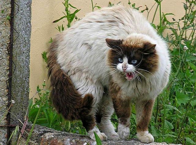 Бешенство у кошек - главное фото