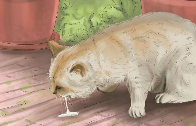 Бешенство у кошек - атипичная форма