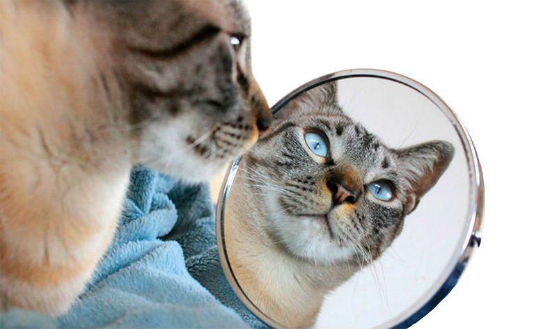 Черные точки у кошки на подбородке