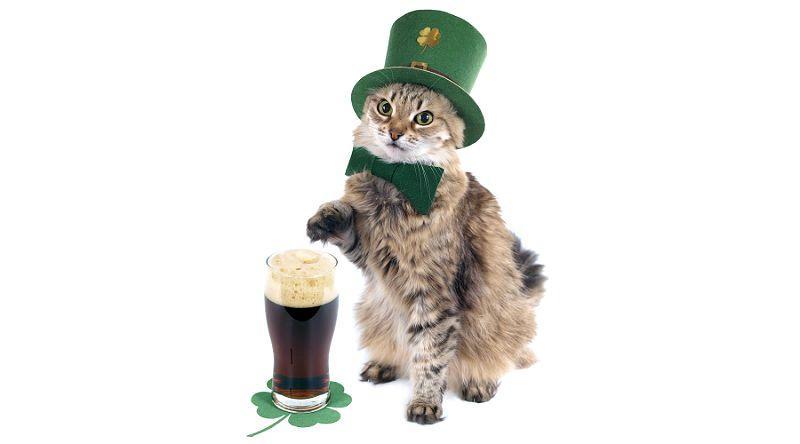 Ирландская кошка