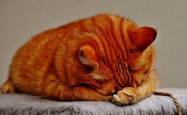 Вирусное заболевание - коронавирус у кошки