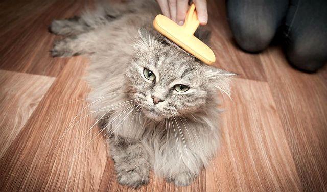 Лечение и профилактика рвоты шерстью у кошек