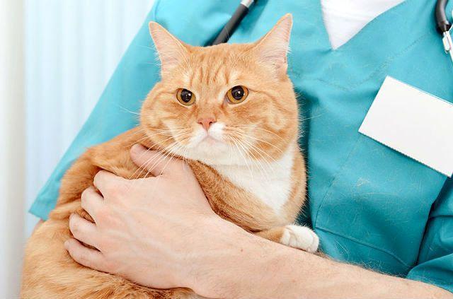Кот не может пописать - первая помощь