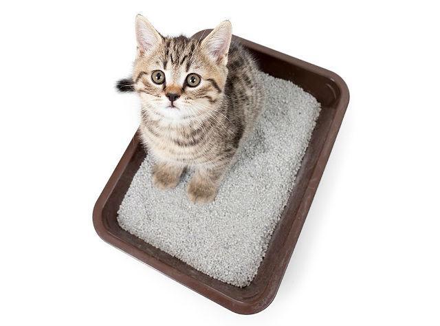 Цистит - Кот не может пописать