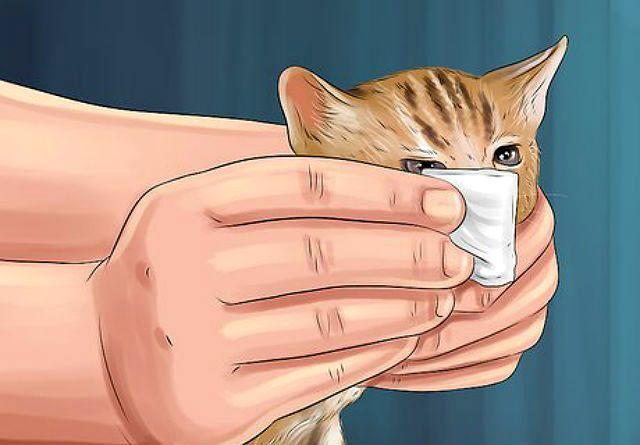 Кровь из носа у котенка