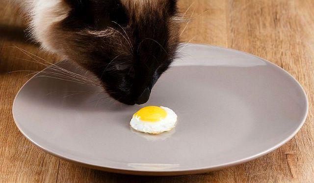 Натуральное кормление сиамского котенка