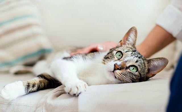 Как избежать осложнений после прививки от бешенства у кошек