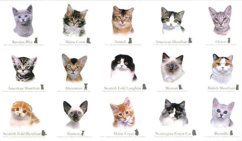 Перечень всех пород кошек