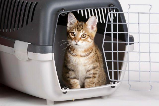 Котенок в контейнере-переноске