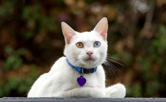 Противопаразитарный ошейник для кошек