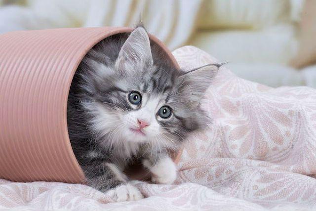 Факторы, влияющие на продолжительность жизни кошек