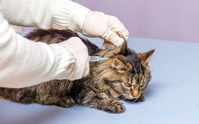 Какой вирус у кошек thumbnail