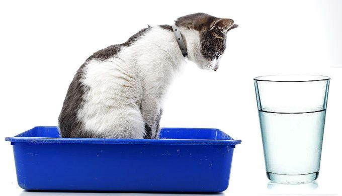 Вазелиновое масло против запоров у кошек