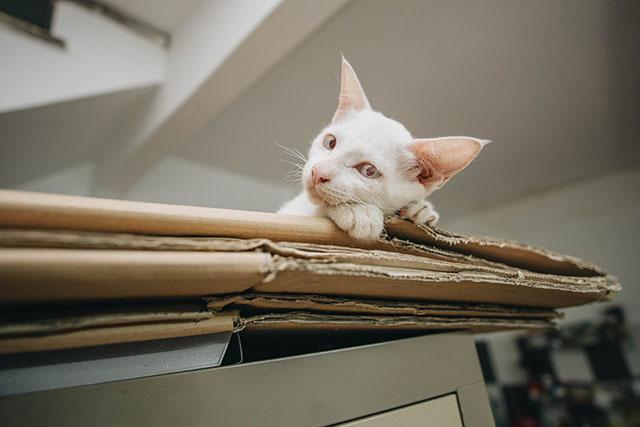 К вирусу восприимчивы все кошки