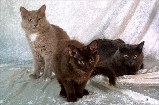 Йоркские коты