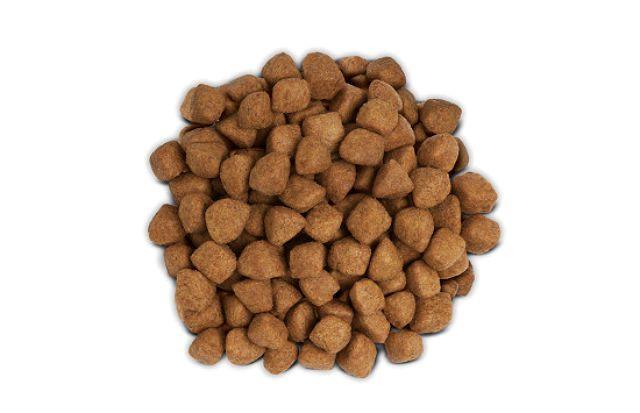 Сухой корм для шотландского котенка