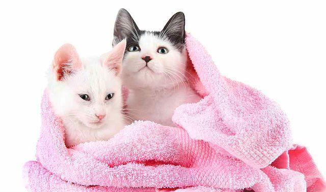 Котята в полотенце