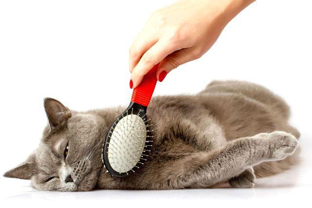 Профилактика блошиной инвазии у кошек